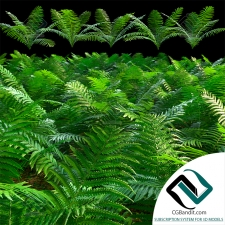 Трава Grass A set of fern