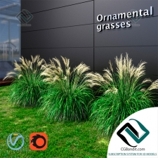 Трава Grass Ornamental grass Miscanthus