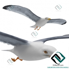 Живые существа Living creatures Seagull in flight